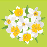 Bouquet of flowers daffodils Royalty Free Stock Photos