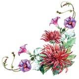 Bouquet flowers , dahlia, corner, watercolor, illustration Stock Photos