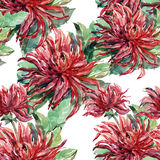 Bouquet flowers , dahlia, watercolor, pattern seamless Stock Images
