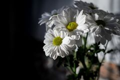 Bouquet of flowers of daisies on the window. Dew drops. stock image