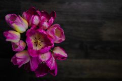 A bouquet of flowers on a dark wooden background. Magenta tulips in a vase. Place for your text. Top view stock images