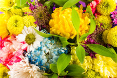 Bouquet of flowers in different colors Royalty Free Stock Image