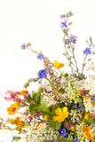 Bouquet of flowers . Royalty Free Stock Image