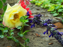 Bouquet of flowers in garden. Bouquet of cut flowers in sunny garden Royalty Free Stock Images