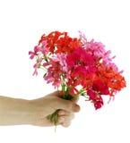 Bouquet of flowers geranium Royalty Free Stock Photos