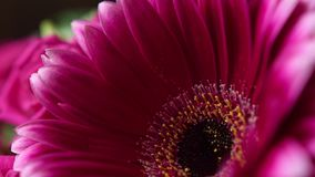 A bouquet of flowers gerberas and roses. Gerber close up.