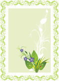 Bouquet of flowers and grass with ladybird. Card Stock Photography