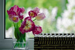 A bouquet of flowers on a green light background. Magenta tulips in a vase. Place for your text. View from the window. A bouquet of flowers on a green light stock photography