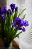 Bouquet of flowers iris Royalty Free Stock Photo