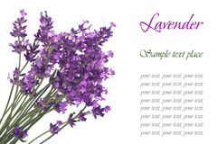 A bouquet of flowers of lavender blue with text Stock Image