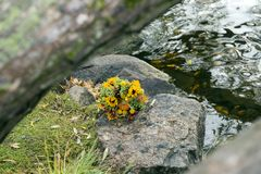 Bouquet of flowers lies on the stones near the water, bride bouq. Uet, sunflowers, autumn bouquet, wedding bouquet Royalty Free Stock Images