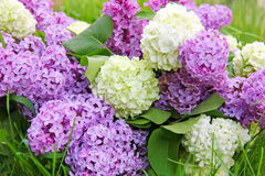 Bouquet of flowers lilac and viburnum decorative Royalty Free Stock Photos