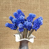A bouquet of flowers Muscari Royalty Free Stock Image