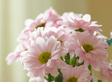 Bouquet of flowers in my house Stock Photos