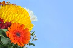 Bouquet of flowers from orange gerberas and chrysanthemums. On bright azure background with copy space Royalty Free Stock Images