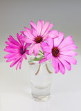 Bouquet of flowers osteospermum in a vase. Stock Images