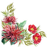 Bouquet flowers peony, dahlia, corner, watercolor, illustration Royalty Free Stock Images