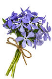 Bouquet from flowers phlox, isolated on white background Royalty Free Stock Photo