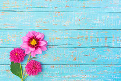 Bouquet of flowers, pink dahlias. Bouquet of garden flowers, pink dahlias, on pastel blue wooden background Stock Photography