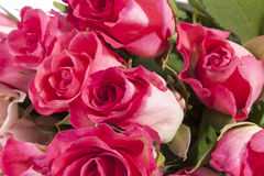 Bouquet of flowers pink roses, close up Royalty Free Stock Photo