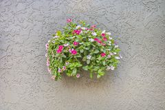 Bouquet Of Flowers Protruding From A Concrete Wall. A bouquet of annual flowers protruding out of a concrete wall royalty free stock photos