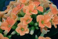 Bouquet of flowers. Flowers bouquet after rain  in garden Stock Photos