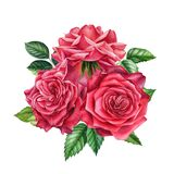 Bouquet of flowers red rose on isolated, white background watercolor hand drawing