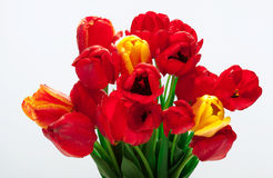 Bouquet of flowers. Bouquet of red and white spring flowers Stock Photography