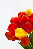 Bouquet of flowers. Bouquet of red and white spring flowers Stock Photos
