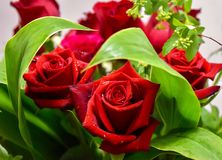 Two red roses  decoration flowers. Bouquet flowers roses arrangement romantic foliage Stock Image