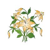 Bouquet of flowers in simple colors on white background, vector vector illustration