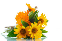 Bouquet of flowers with summer daisies Royalty Free Stock Photos