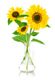 Bouquet flowers of sunflower in glass vase Royalty Free Stock Images