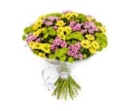 Bouquet of flowers top view on white background Stock Images