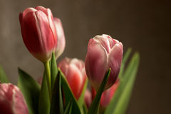 Bouquet flowers tulips. Bouquet of pink tulips on a dark background Royalty Free Stock Photo