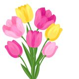 Bouquet of flowers tulips on white background Royalty Free Stock Images