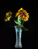Bouquet of Flowers in a Vase Isolated on a Black B Royalty Free Stock Image