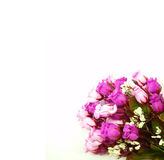 Bouquet Flowers on white background. Beautiful Bouquet Flowers Border on white background Royalty Free Stock Photography