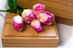 A bouquet of flowers on a white background with wooden crusts. Purple tulips on a wooden box. Place for text. Top view stock photos