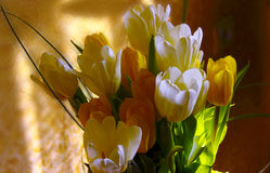Bouquet of flowers. Bouquet of white and yellow tulips Stock Photography