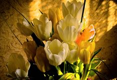 Bouquet of flowers. Bouquet of white and yellow tulips Stock Image