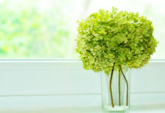 Bouquet of flowers on the window. Bouquet of flowers on a green Windowsill Royalty Free Stock Image