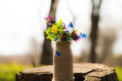 A bouquet of forest flowers. beautiful flowers vase with flowers in nature royalty free stock image