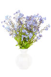 Bouquet of forget-me-not flowers. In a white ceramic vase isolated on white background Stock Photography