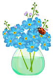 Bouquet of forget-me-not flowers in a glass vase. Ladybird. Royalty Free Stock Photos