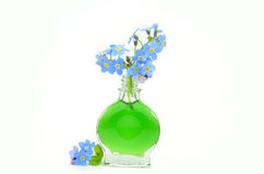 Bouquet of forget me not flowers Royalty Free Stock Image