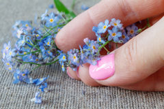 Bouquet of forget-me not`s Stock Photo