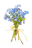 Bouquet of forget-me-nots. Bouquet of blue wild forget-me-not flowers tied with bow isolated on white Stock Image