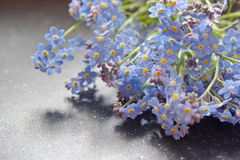 Bouquet of forget me nots lying on the table Stock Photos