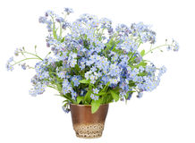 Bouquet from Forget-me-nots (Myosotis) Royalty Free Stock Images